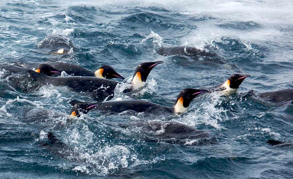 Картинки про природу антарктиды