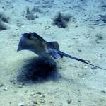 Diving in Comino