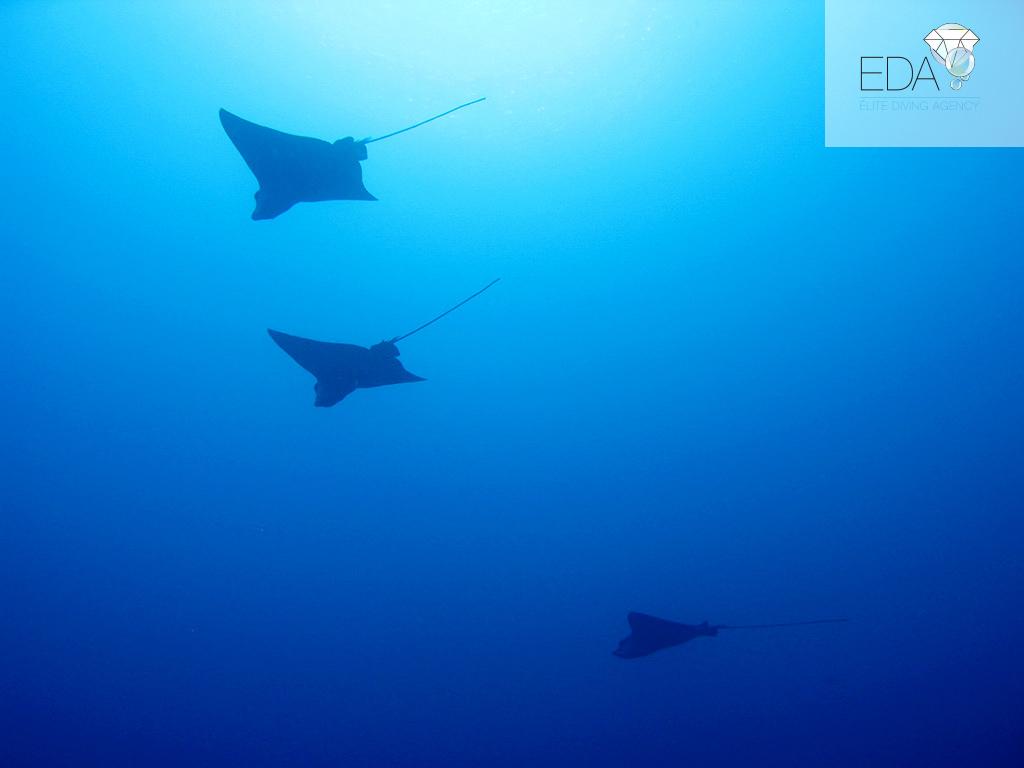 Vacaciones de buceo en Maldivas