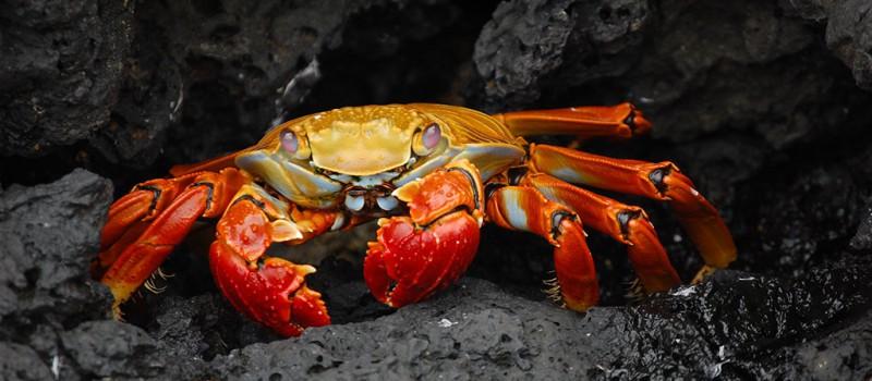 Galapagos Islands - Photo by: Lieutenant Elizabeth Crapo