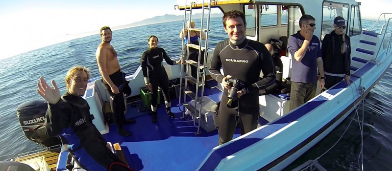 Cage diving with the Great White Shark