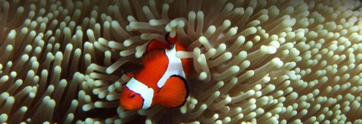 Dive Raja Ampat, Indonesia