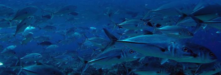 Dive Warren Thila in the Maldives