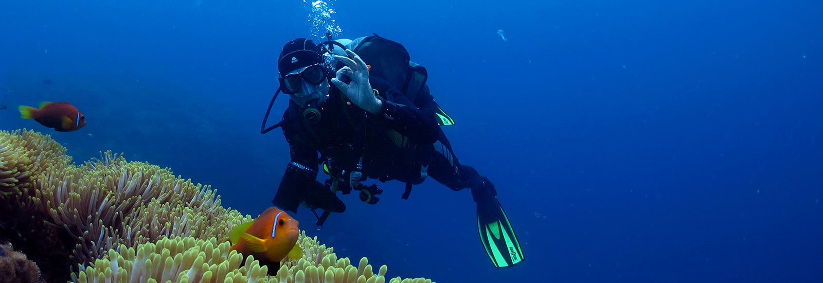 6 types of dives off a diving
