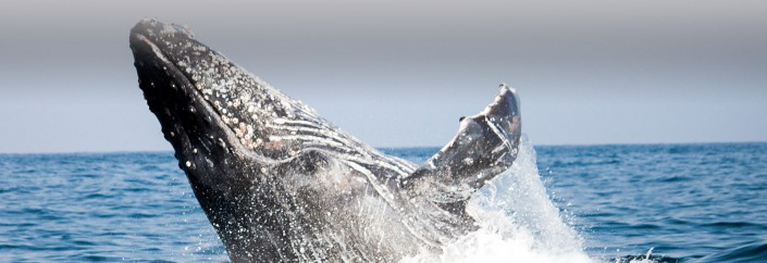 The Sardine Run 2013