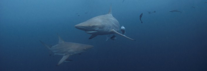 Shark diving top locations worldwide