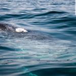 humpback-whale-6