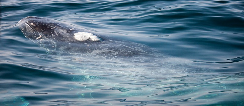 A whale close to our boat