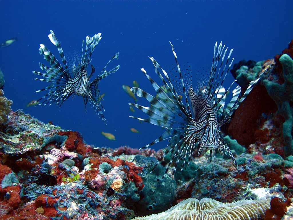 Maldives Liveaboard Dive & SPA