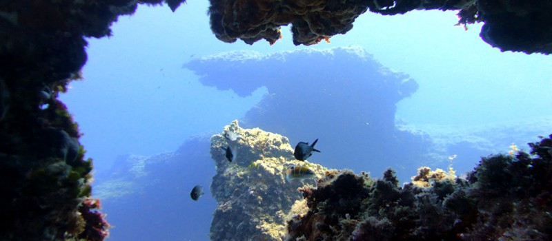 Dives in Malta - Photo credit: Matthew Sammut