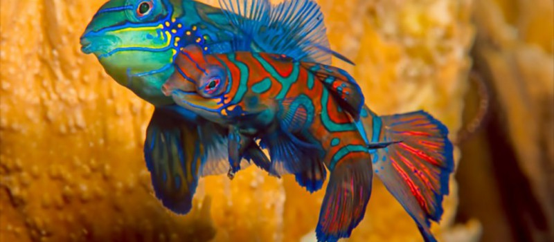 North Sulawesi Diving Holiday