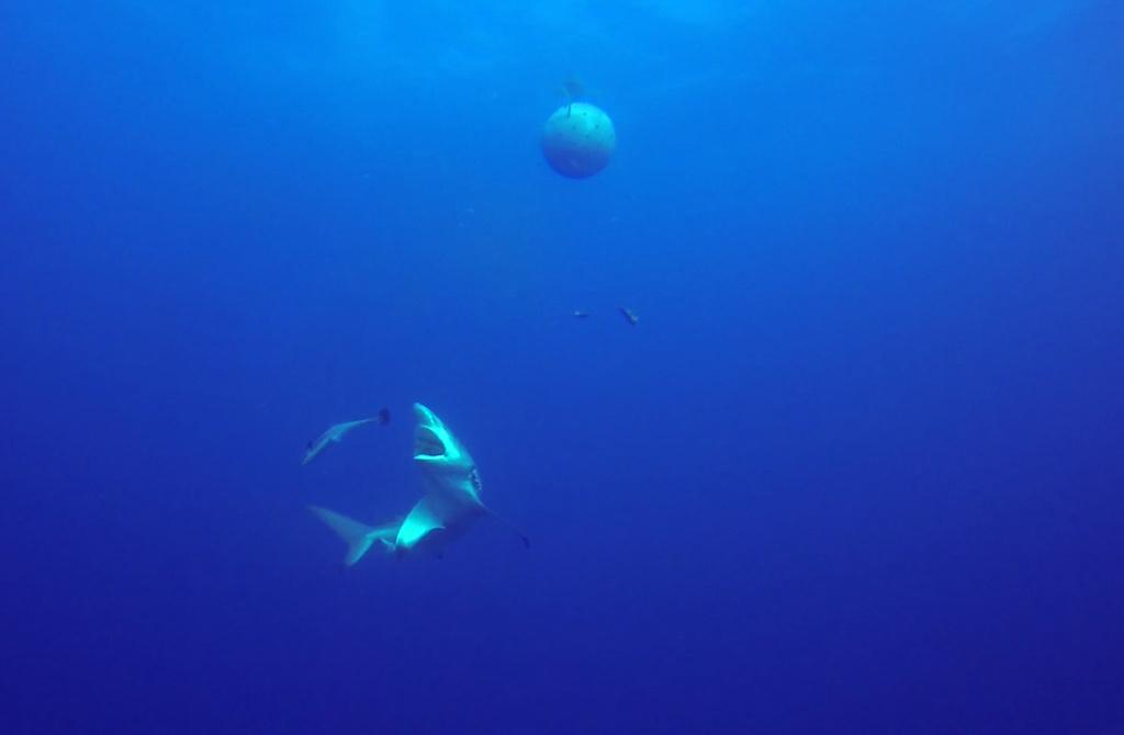 black tip shark bite - photo #27