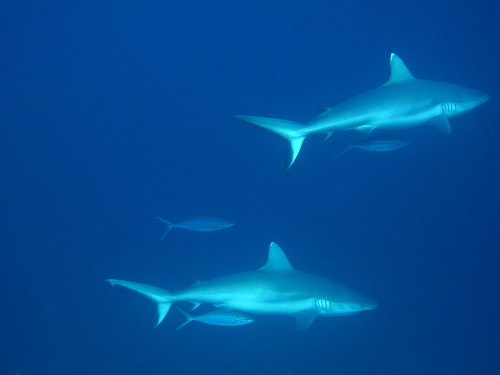 Blue Lagoon Maldivas Cruceros de lujo para Scuba Diving carta completa