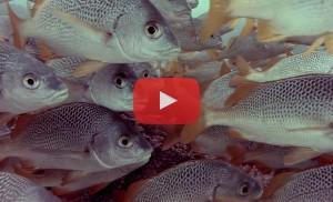 v-animals-sea-life-galapagos