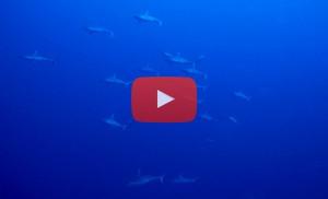 v-shark-diving-warren